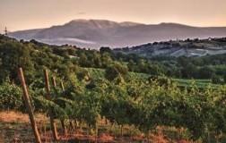 Casal Thaulero cantina vini Abruzzo vigneti