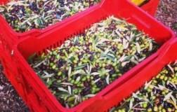 Case d'Alto Coevo Ravece Olive
