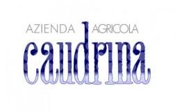 Caudrina.jpg