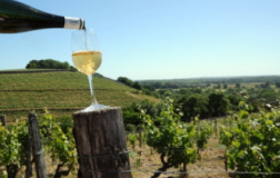 Chardonnay per tutte le stagioni: le damigelle (Borgogna #1)