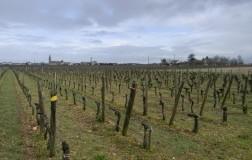 chateau petit village pomerol vino rosso bordeax francia cantina vini vigneti panorama