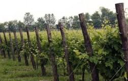 conti riccati asolo prosecco superiore extra brut vino spumante veneto vigneti panorama