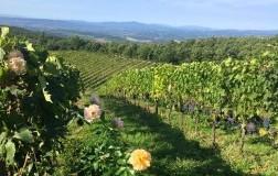Due cru a confronto: Vecchie Vigne e Fornace