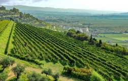 ). Stop all'Amarone contraffatto in rete