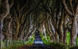 Il sentiero di alberi e la birra di Antrim