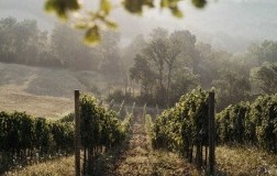 La Lupinella cantina vini Toscana vigneti