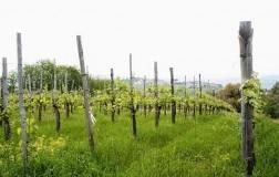 Lapio Wine Tasting (2): Fiano di Avellino