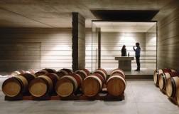 Masseto Wine Cellar