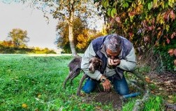 moncalvo monferrato cane da tartufo