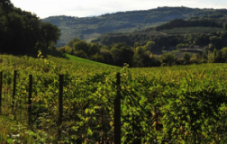 Nel cuore verde d'Italia