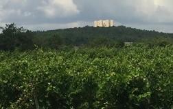 Nero di Troia Castel del Monte