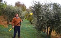 Olio Veglio, unico in Piemonte