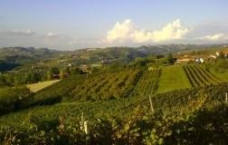 Panoramica vigneti Cozzo Mario Piemonte