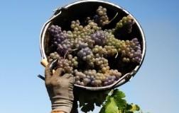 Pinot grigio delle Venezie Doc 2017: primi ordini Usa