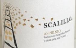Drengot Scalillo Asprinio