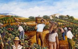 Si fa presto a dire vino (2): Il vino contadino