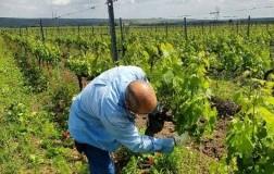 Tenuta Viglione lavori in vigna Puglia