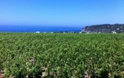 La Pietra di Tommasone cantina vini Ischia