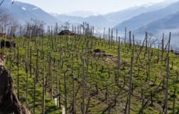 Una premessa: la Valtellina