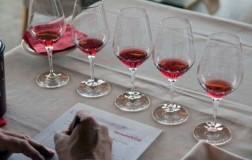 Degustazione Vernatsch Schiava Alto Adige Vino Rosso