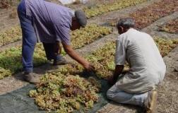 Vini dolci (1): Italia del Sud