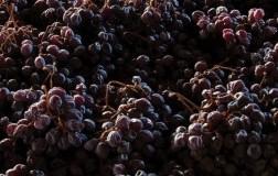 Vini dolci (3): il Nord Italia
