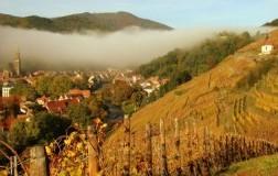 Vini dolci (6): Alsazia
