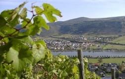 Vini dolci (8): dolcissima Germania #1