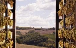 Vini dolci (2): il Centro Italia
