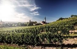 Weingut Johanneshof Reinisch vigneti