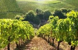 Winegraft: ricominciamo… dalle radici