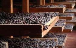 Appassimento uve Amarone della Valpolicella