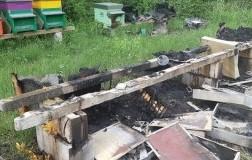 Incendio doloso, bruciate 2 milioni di api in Friuli