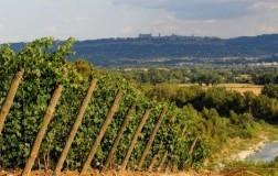 Strozzavolpe Bigi, il buono a € 7. Vino Bianco Strozzavolpe Grechetto 2016