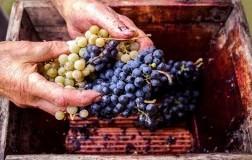 blend uva vino