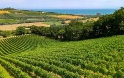 Cantine Fontezoppa panorama vigneti