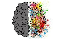 fattore umano cervello