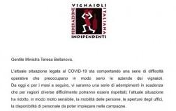 Lettera Fivi alla ministra dell'agricoltura Teresa Bellanova