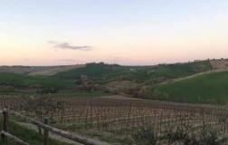 pievalta castelli di jesi verdicchio marche