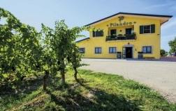 Pilandro Cantina vini marche vigneti