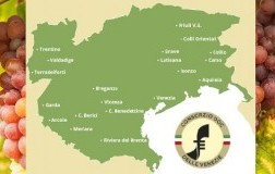 Comprensorio Pinot grigio delle Venezie Doc