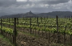 Toscana Igt vigneto