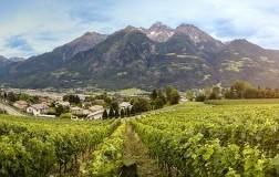 Vigneti rosset Terroir Valle d'Aosta