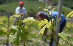 Vini agricoli, ecosostenibilità ambientale, vigneti