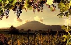 Amarcord Campania Felix (2): White wines and single-grape Aglianico