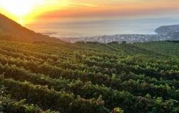 Cantine di Crateca Ischia panorama vigneti